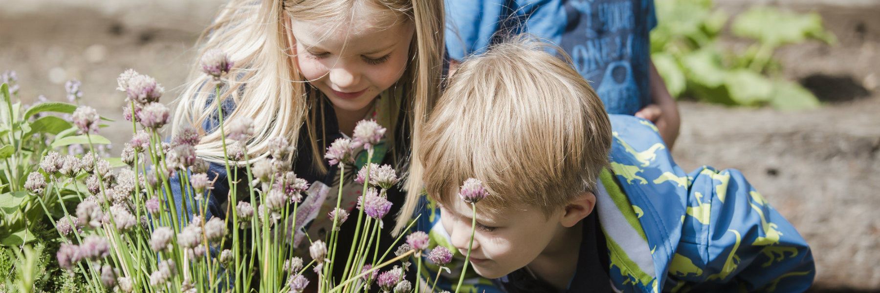 Nursery children smelling flowers