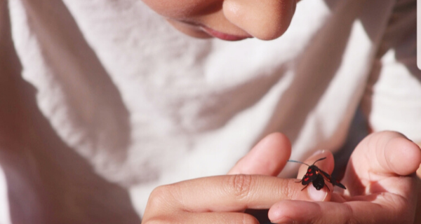 Child holding a butterfly